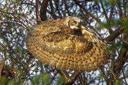Owl Dale+Paul Flying+saucer newsletter photo AG1 3 12 21
