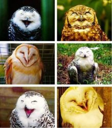 Owls 6 from FB AG1 6 10 21